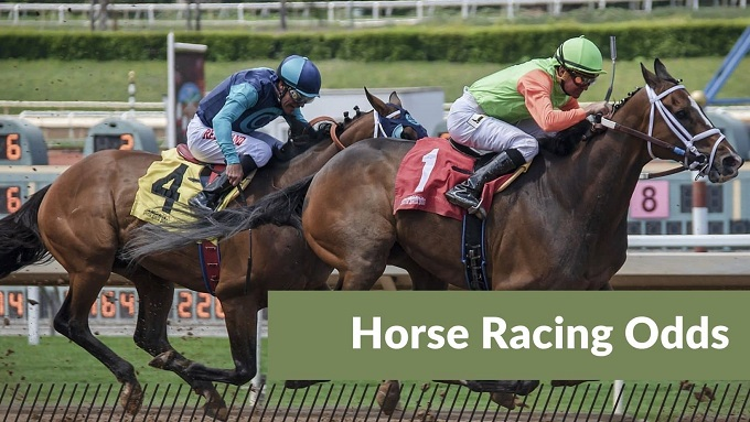 how to read horse racing odds